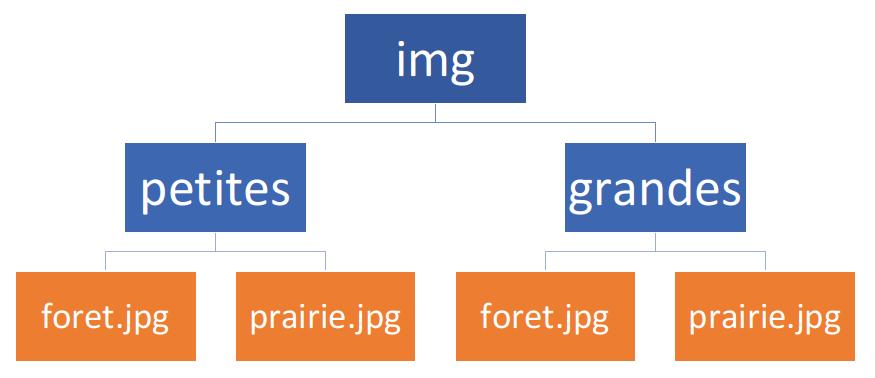 Arborescence des images